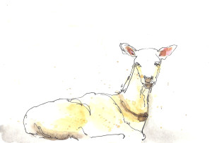 201408 Animal adv goat