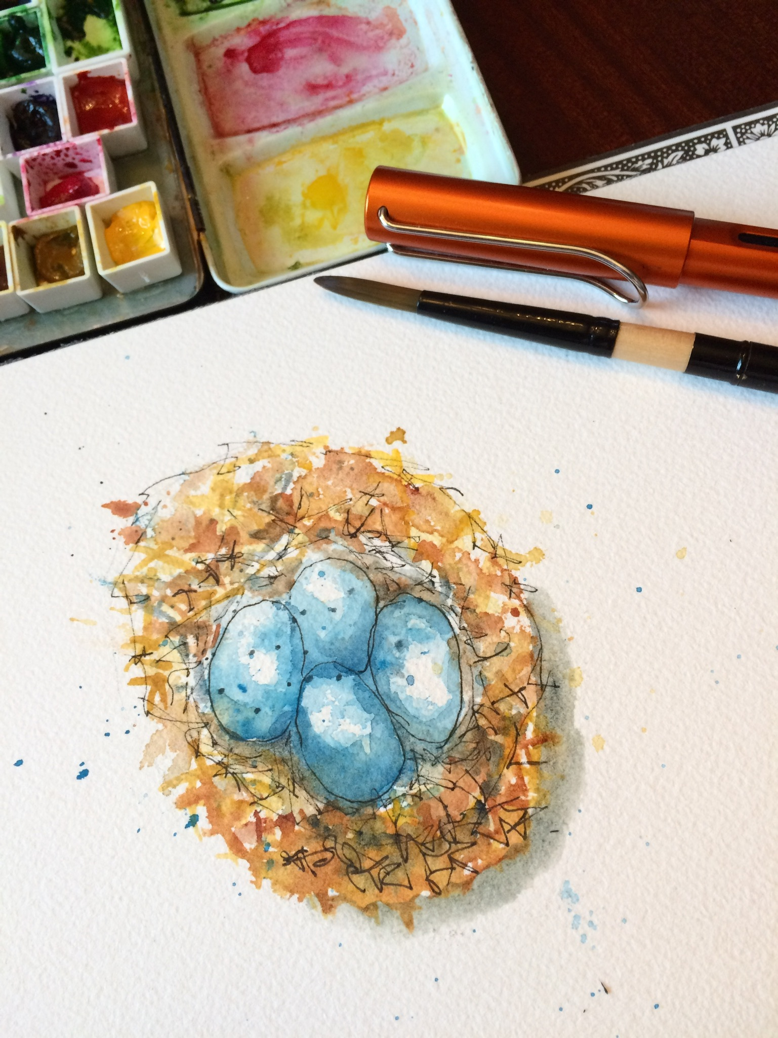 Robins nest with eggs