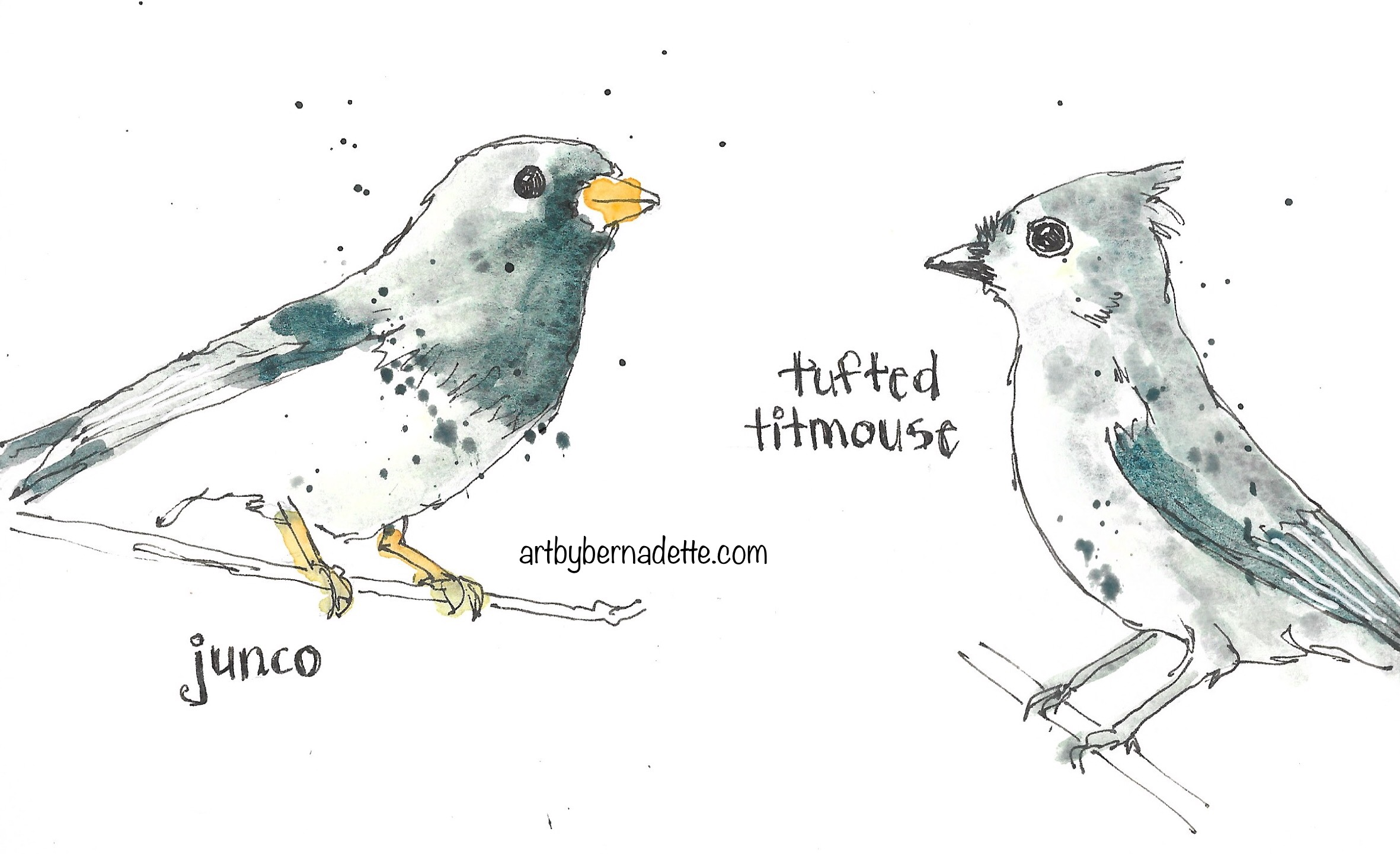 Junco and tufted titmouse