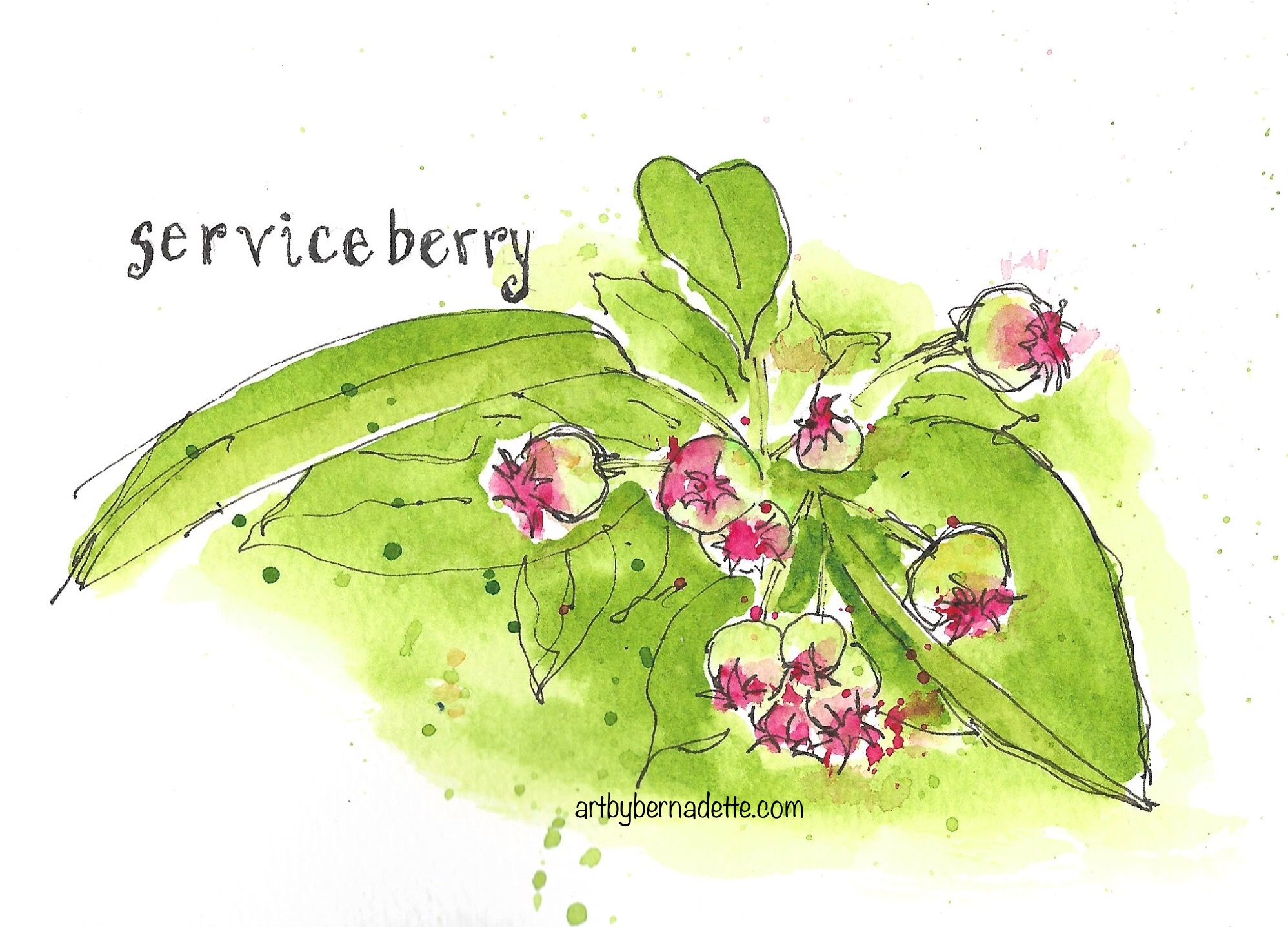 Serviceberry tree
