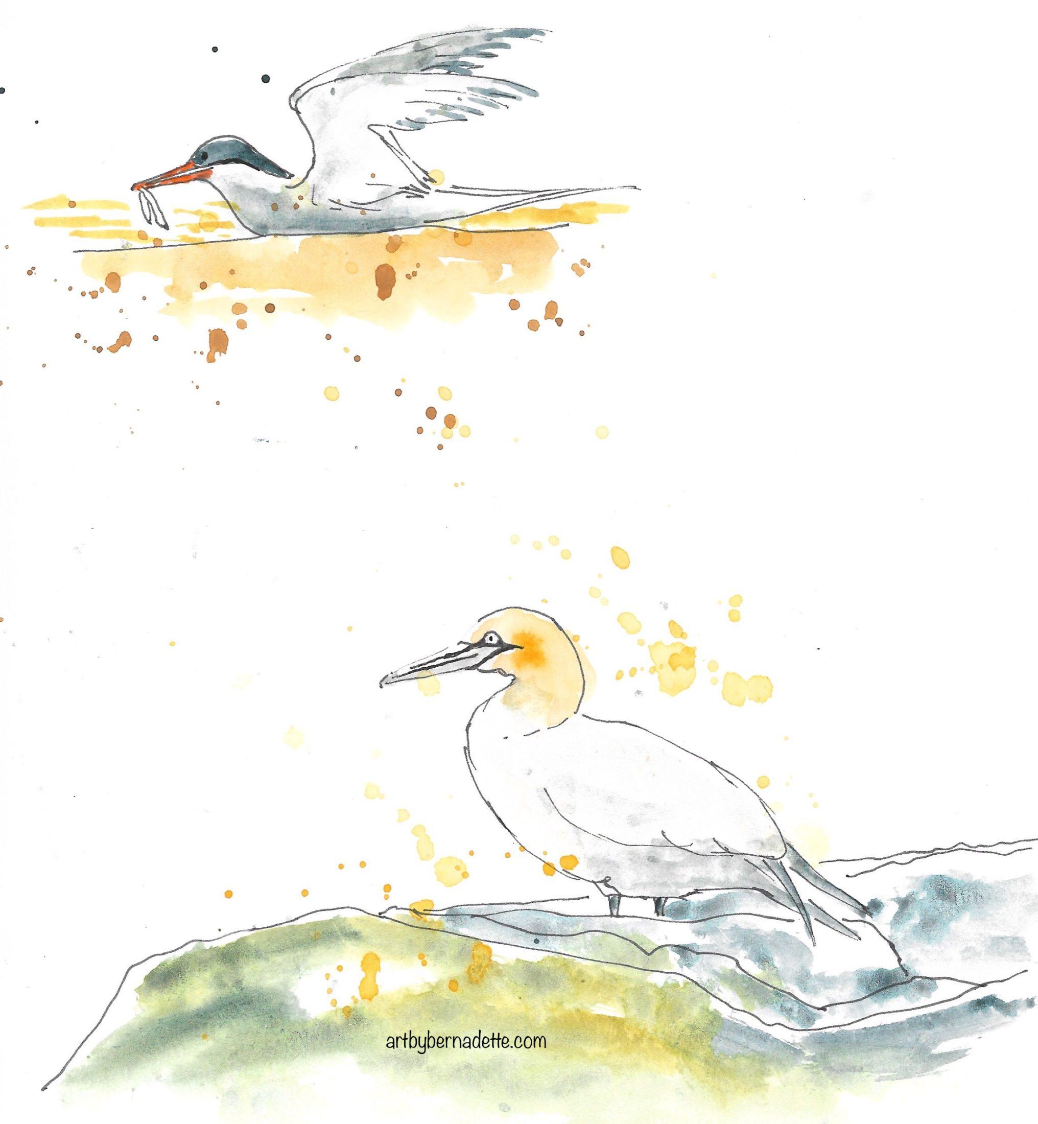 Tern & Northern Gannet